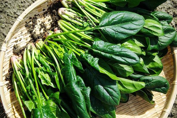 vellutata di spinaci