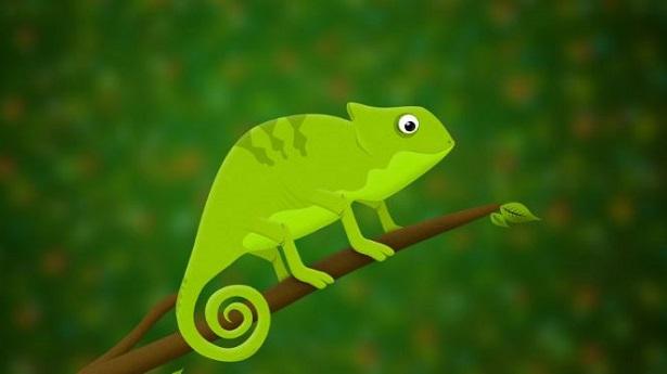 Camaleonte Immagini E Prezzo Idee Green