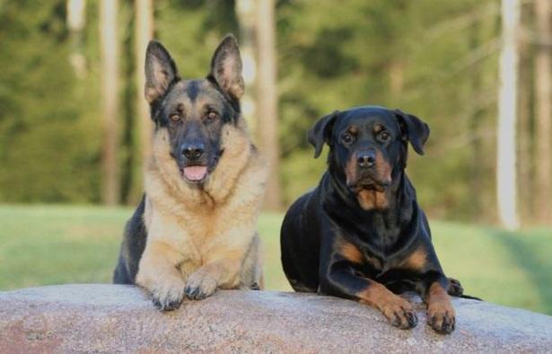 Nomi Per Cani Come Scegliere Idee Green