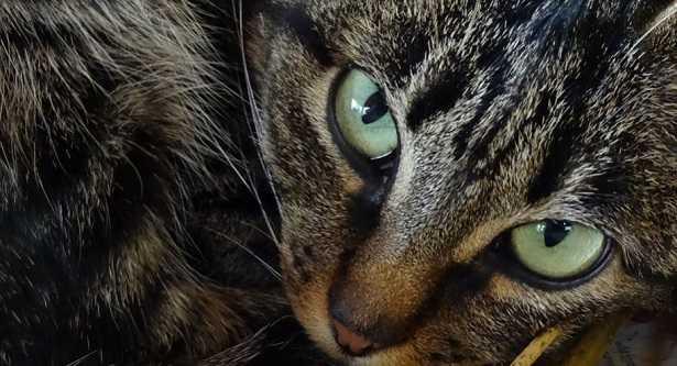 Colori gatti