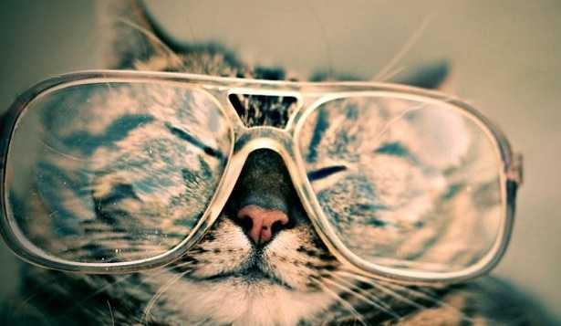 Stress nel cane e stress nel gatto