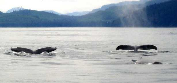 Balene e Balenottere