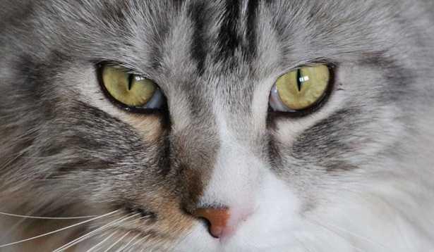 Cambio Pelo Del Gatto Come Gestirlo Idee Green