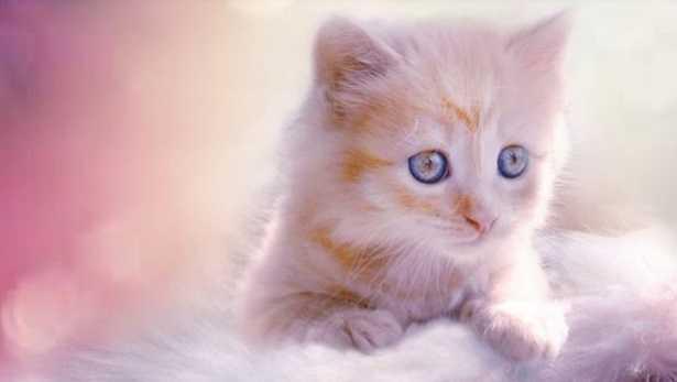 Cambio pelo del gatto