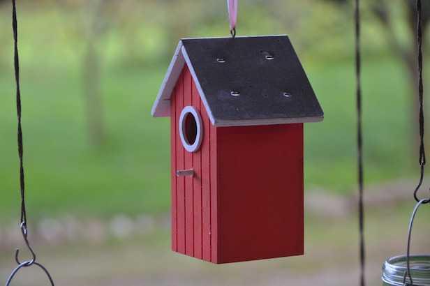 Super Come costruire una casetta per gli uccelli - Idee Green WK24