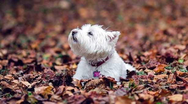 Cattivo odore del cane