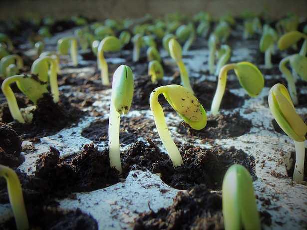coltivare soia