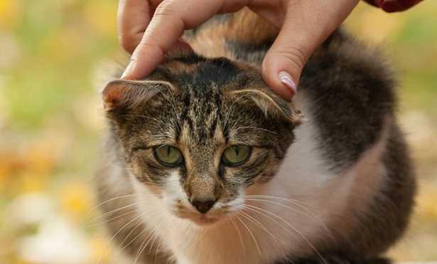 Come dare una pillola al gatto