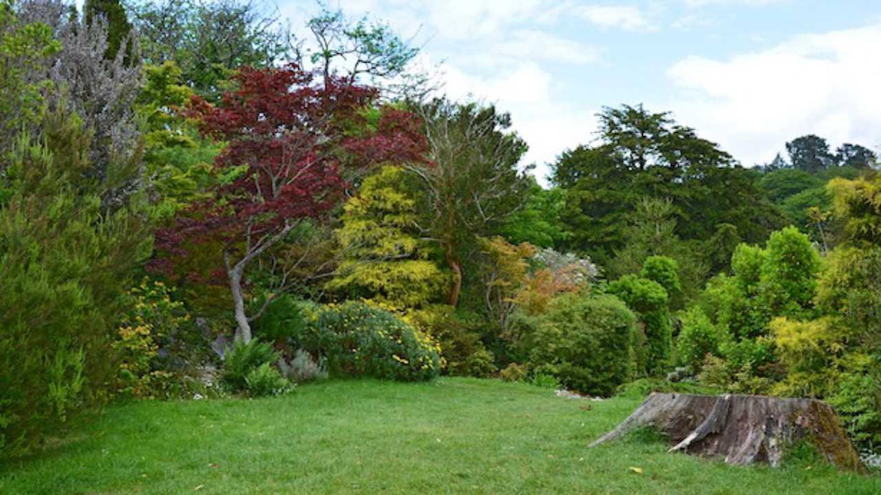 Siepi Miste Da Giardino giardino inglese, come farlo - idee green