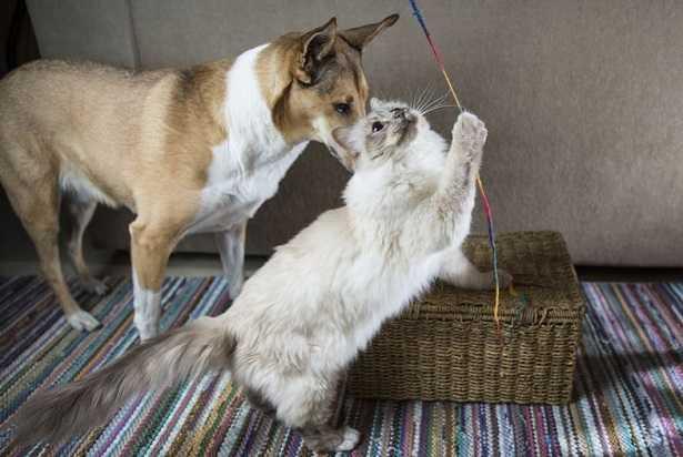 Giochi per cani fai da te
