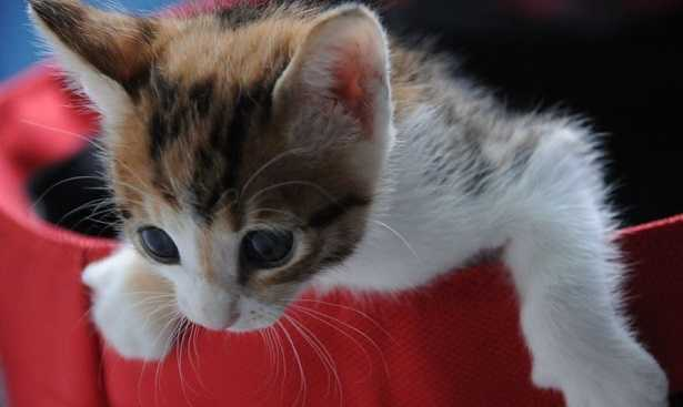 Giochi per gatti fai da te idee green - Cucina casalinga per gatti ...