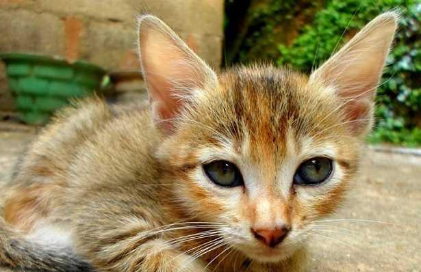 malattie del gatto