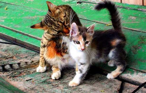 Palla di pelo nei gatti
