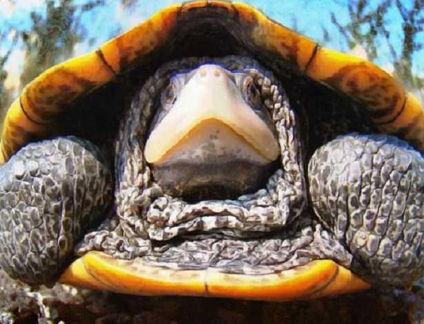 recinto per tartarughe di terra idee green