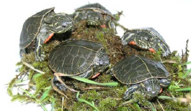 Recinto per tartarughe di terra