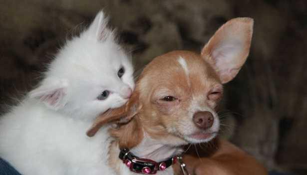 Mutua per cani e gatti