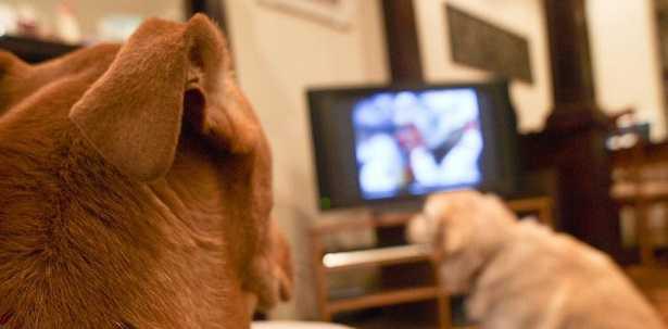 Cani e tv