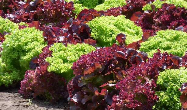 curare orto in modo naturale