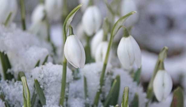 Giardino inverno piante idee green - Giardino d inverno permessi ...