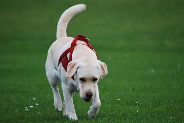 Perch il cane mangia erba idee green - Eliminare odore pipi cane giardino ...