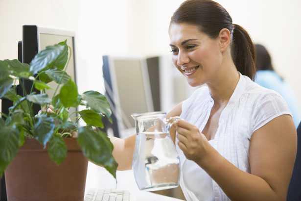 Piante da ufficio tanti consigli idee green - Piante da ufficio resistenti ...