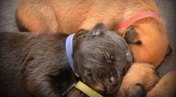 Svezzamento cani
