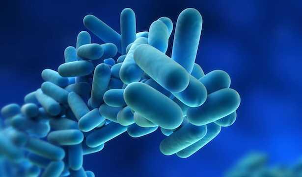 bevande probiotiche fai da te