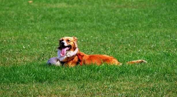 Cani da giardino razze idee green - Giardino per cani ...