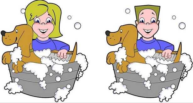 Come tosare un cane