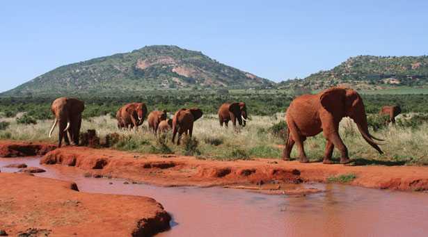 Estinzione elefanti rischio concreto
