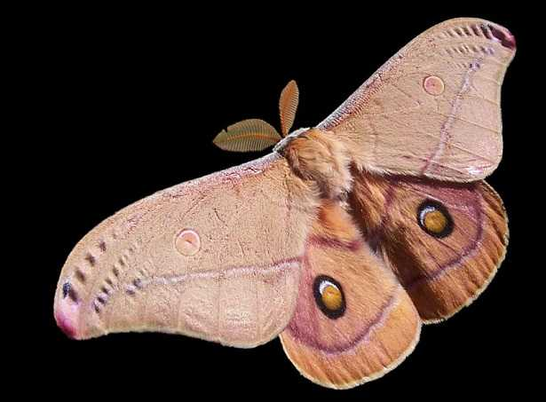 farfalle notturne in casa