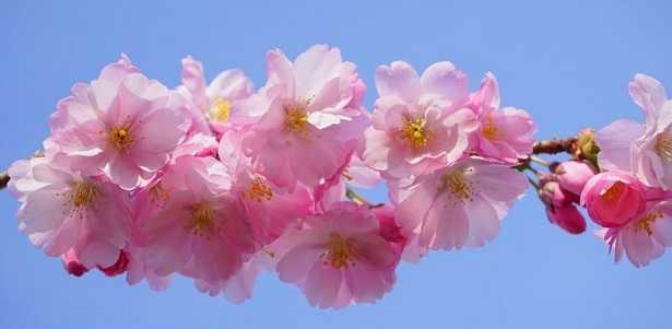 Nomi Di Fiori Rosa.Fiori Rosa Nomi E Immagini Idee Green