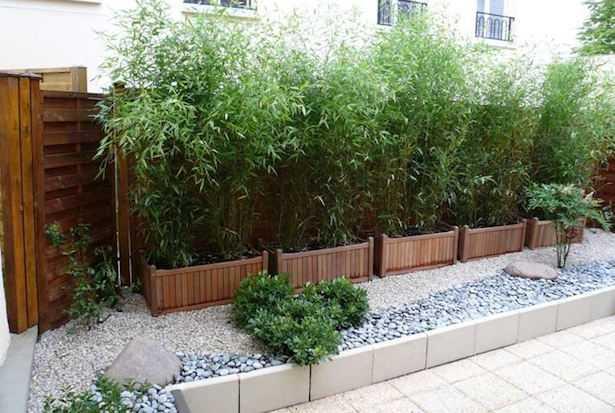 Siepe in vaso consigli alla coltivazione idee green for Piante da terrazzo