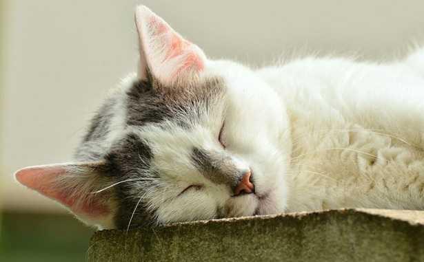 Vita media del gatto