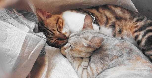 Coccole ai gatti