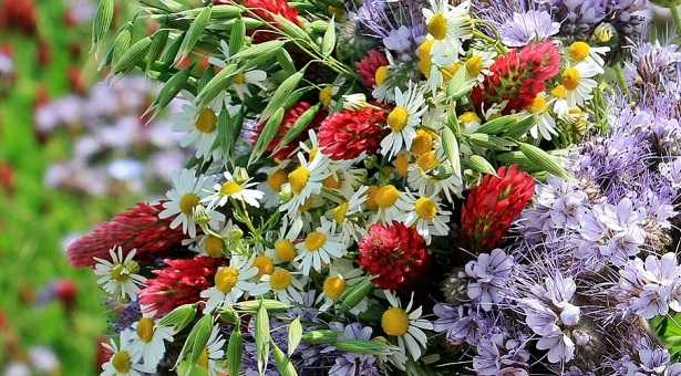 Favoloso Mazzo di fiori: come sceglierlo - Idee Green PS69