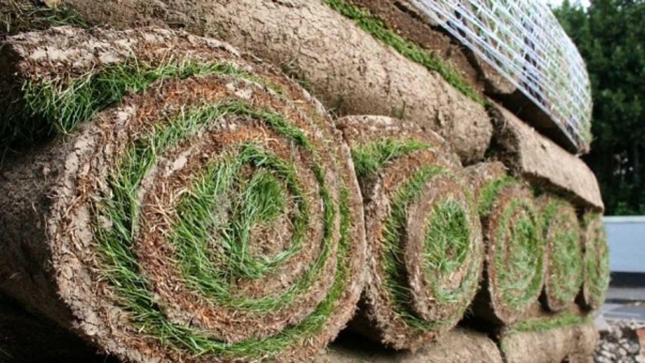 Manutenzione Prato Di Gramignone prato a rotoli: vantaggi e prezzi - idee green
