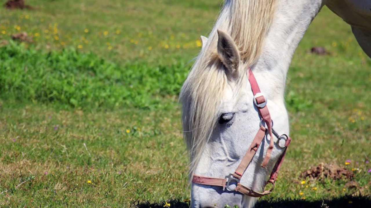 Quanto Costa Un Cavallo Idee Green