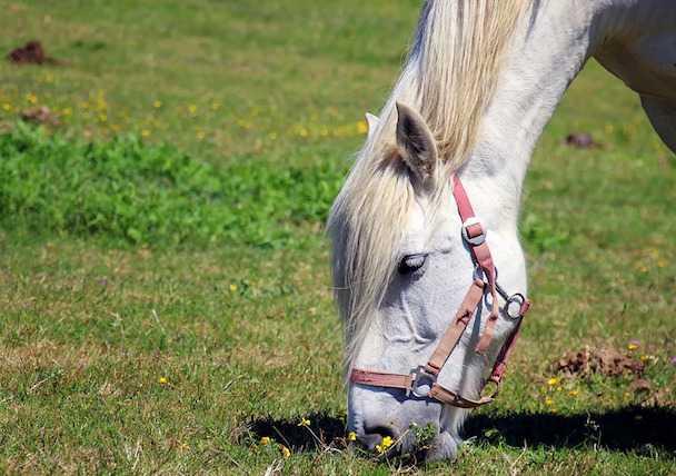 Quanto costa un cavallo