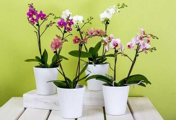 Terriccio per orchidee
