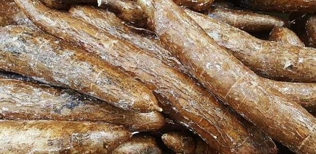 Yucca: caratteristiche del tubero, proprietà e ricette