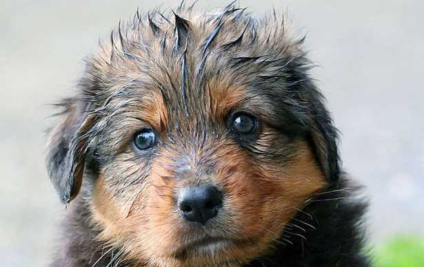affido cani