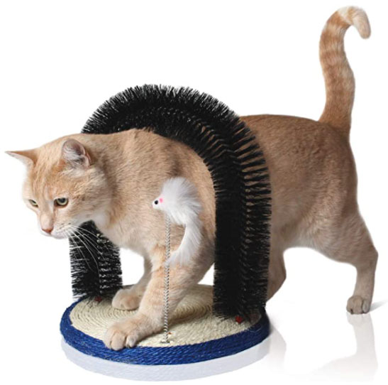 arco coccole gatto