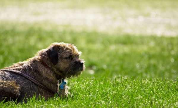 cane in giardino