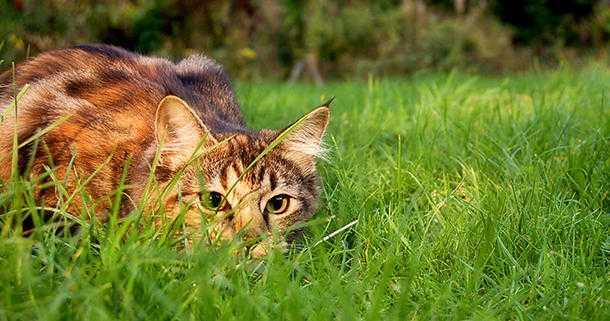 gatto in giardino consigli