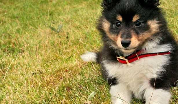 Guinzaglio cuccioli