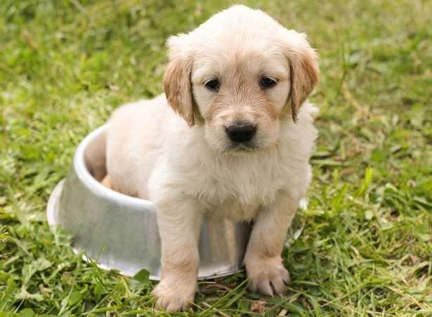 Latte per cuccioli di cane