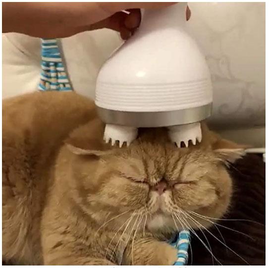 massaggiatore per gatto