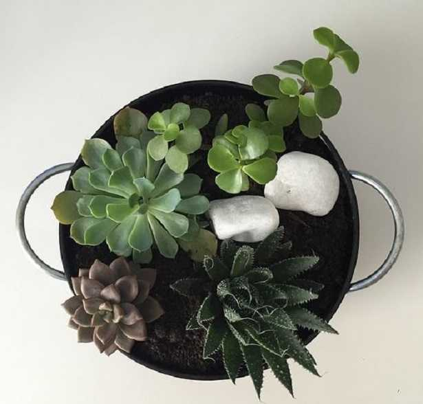 Mini giardini come farli idee green for Dove comprare giardino zen da tavolo
