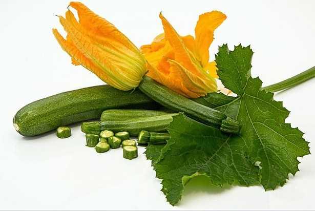 Oidio zucchine